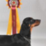 winner dax.jpg