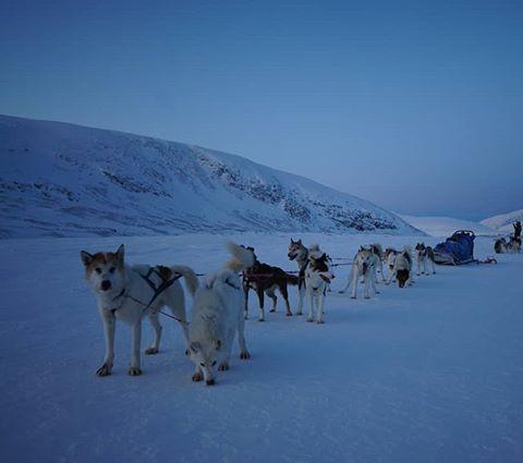 Øvre-Dividal National park - December. I