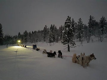 First sled tour of 2020 🐺😍 godt nyttår