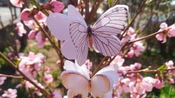 Ghirlanda cu Fluturași