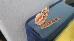 Semn de Carte Fluture