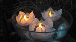Nuferi de Origami Plutitori noaptea