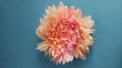 Crizantemă Gigantică