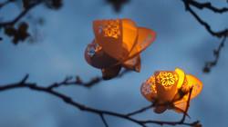 Lampioane de Hârtie noaptea