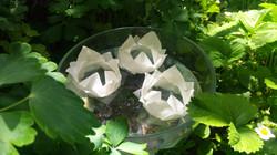 Nuferi de Origami Plutitori