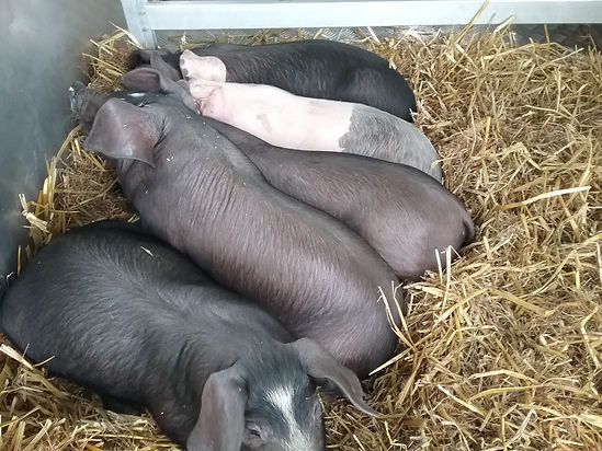 20190601_new piglets.jpg