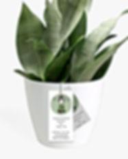 plantedmockup1.jpg