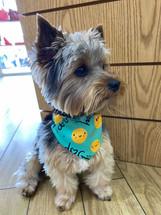 HAPPY DOG PET BANDA+COLLAR