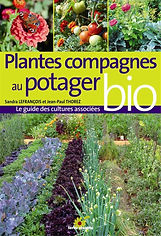 Plantes compagnes au potager bio.jpg