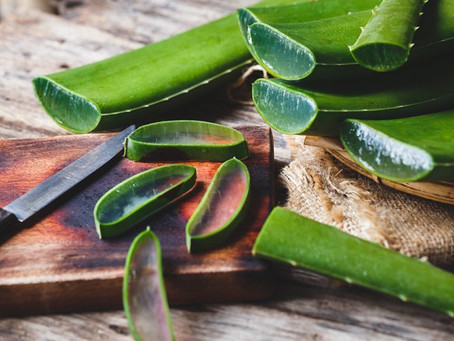 Aloe Vera and Its Natural Skin Care and Health Benefits