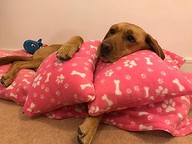 Lena Pink Pillows.jpg