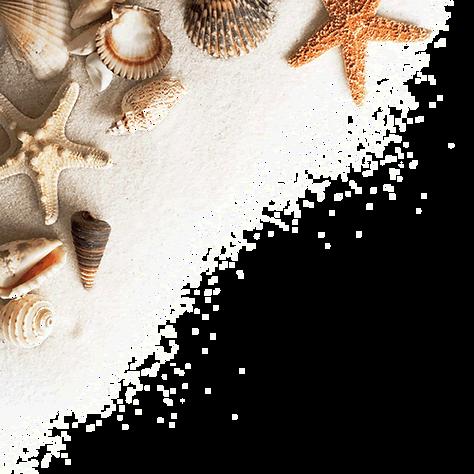 おしゃれな貝殻タイル・マオリシェル