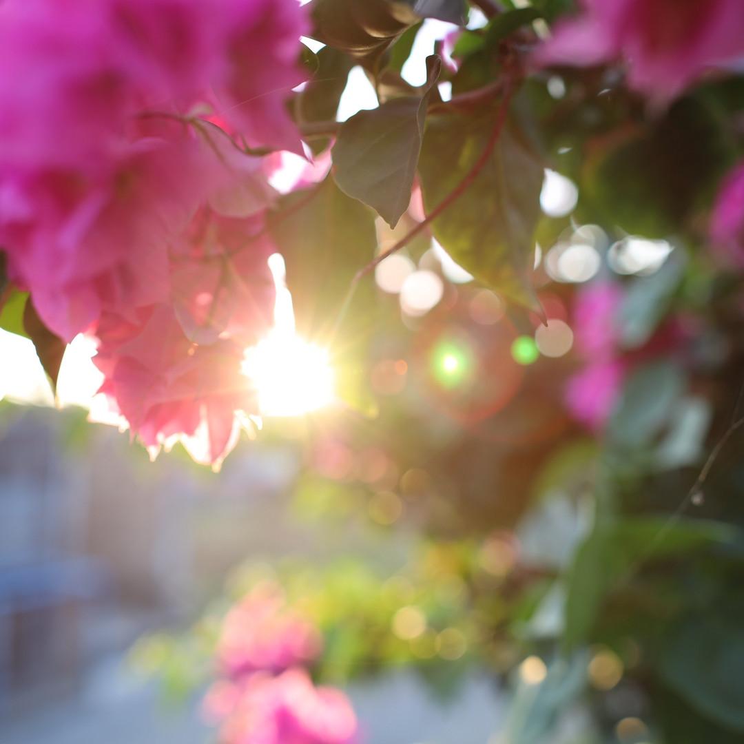 flower2.jpeg