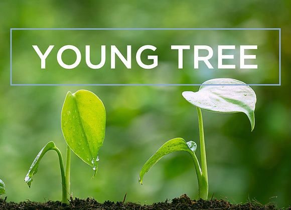 The Young Tree Package