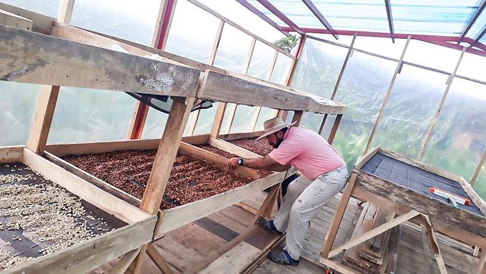 El Amanecer Kaffee kaufen Honey getrocknet