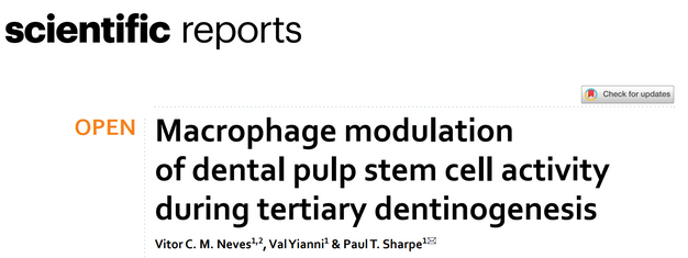 Macrophage modulation of dental pulp stem cell activity during tertiary dentinogenesis