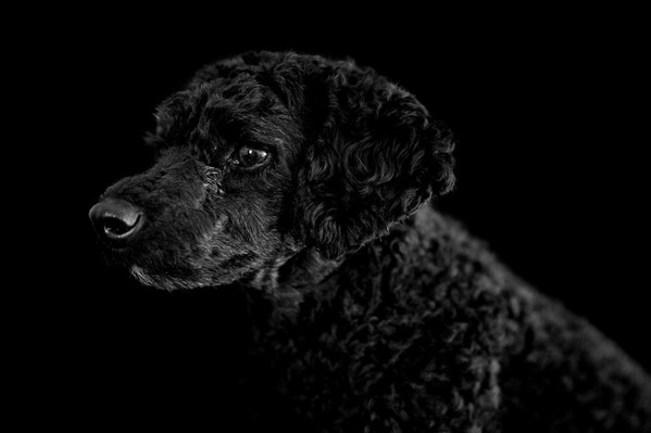 Trainman Photography Chicago Pet Portraits