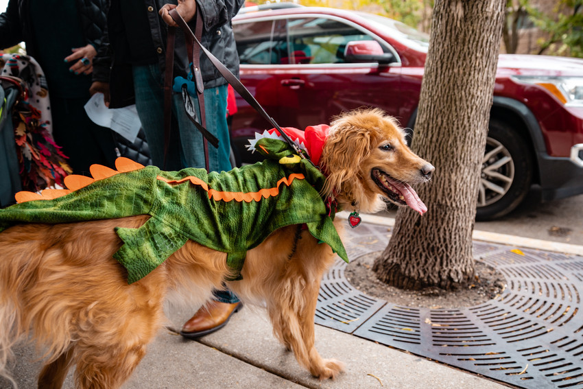 Lakeview Halloween Pup Crawl