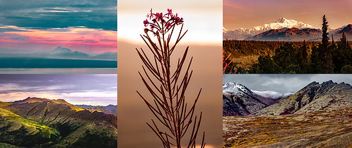 Alaska Warms - Set of Five Greeting Cards