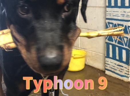 台風9号接近中      Typhoon 9 approaching