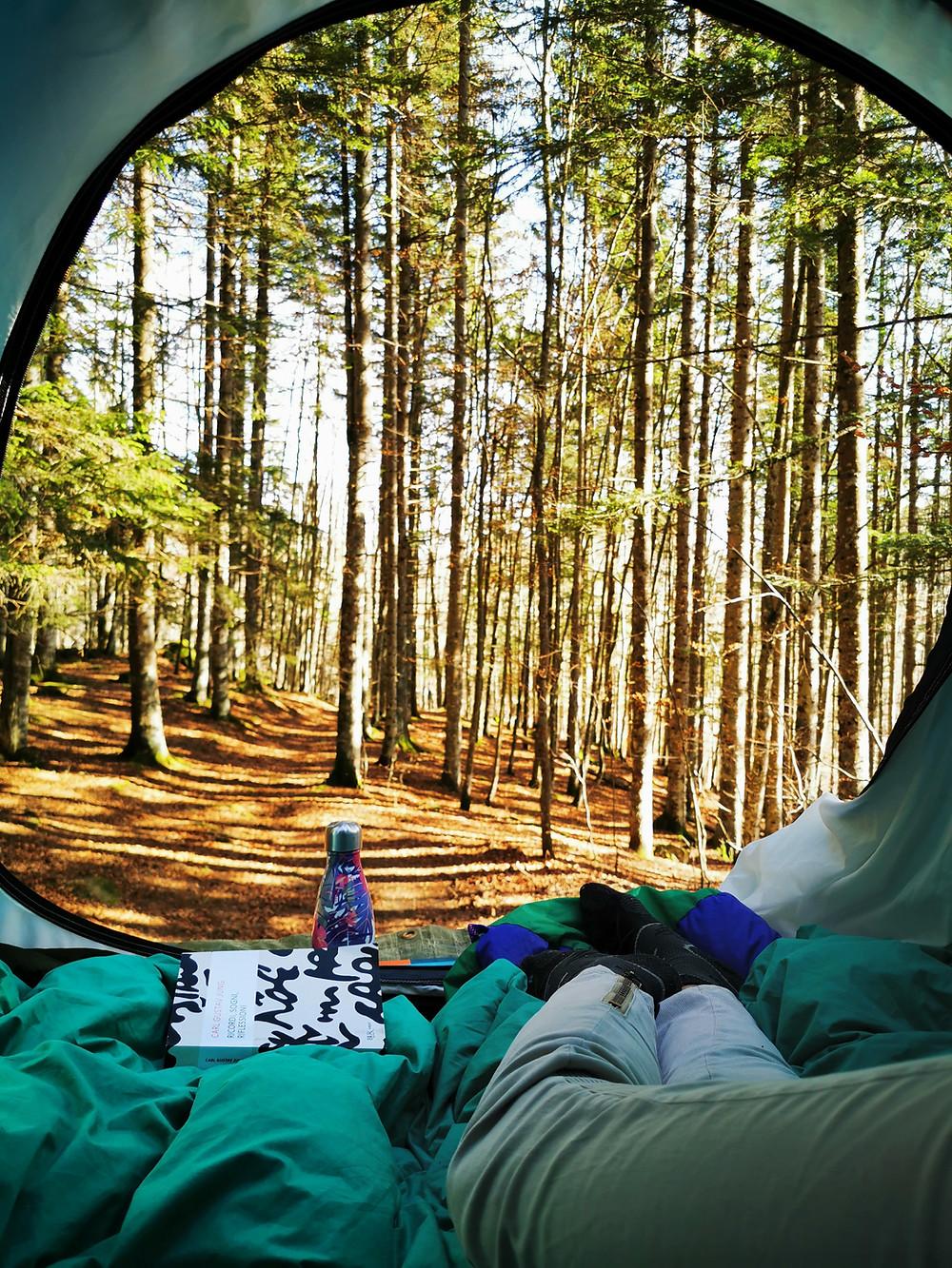 dentro la tenda da tetto vedo fuori: il bosco con i colori autunnali