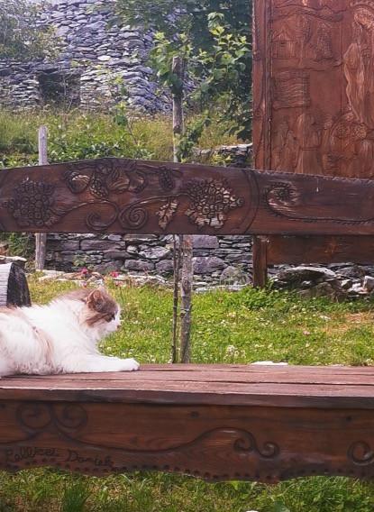 gatto peloso sdraiato su panchina di legno intagliata a mano nell'Oasi di Campocatino, Toscana