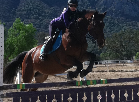 Animal Communication & Cassie Miracle Horse