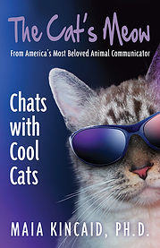 Chats with Cool Cats.jpg
