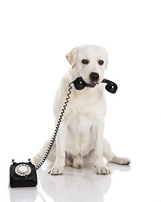 Time to Talk with Your Dog! Animal Commu