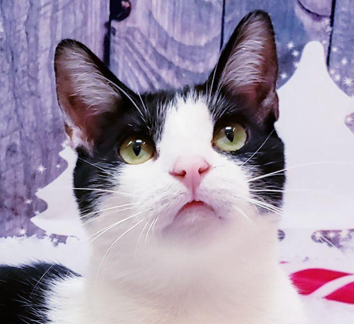 Kato the cat Animal Communication World.Com