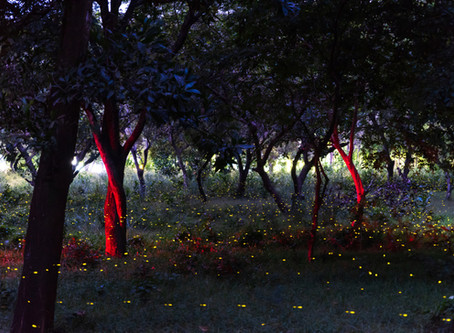 Talking with Fireflies!