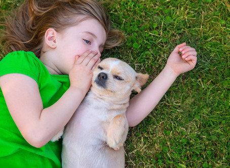 Doggie Talks About Coronavirus Lockdown
