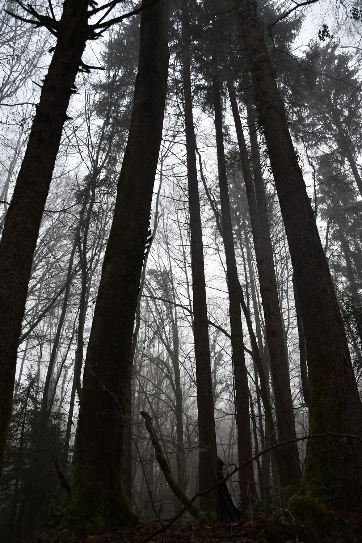 Forêt Noire dans laquelle se cache une silhouette...