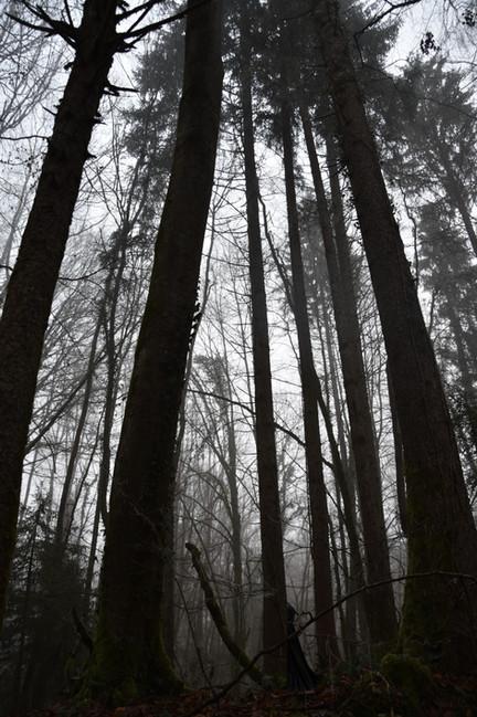 Entrée de la Forêt Noire