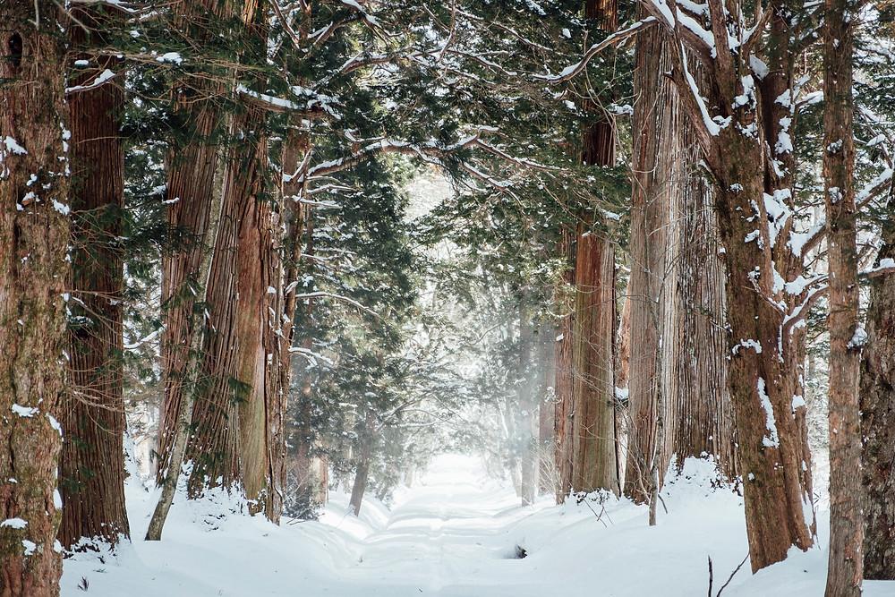 Forêt recouverte de neige