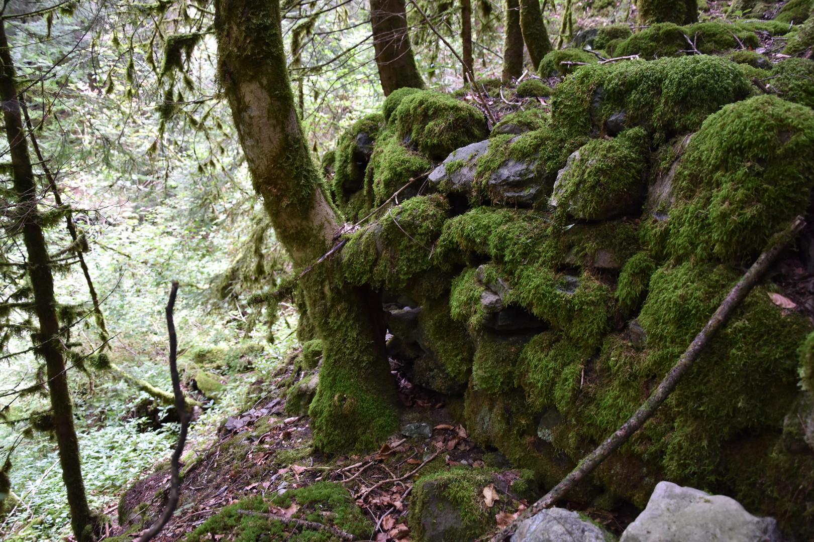 Forêt de Stormwood