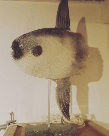 Mondfisch, Mola Mola aus Recycling Glas