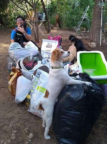El-cisne-negro-voluntarios-campaña-perro