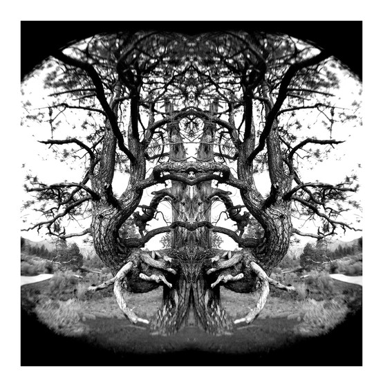 dbl_Vol_Tree.jpg
