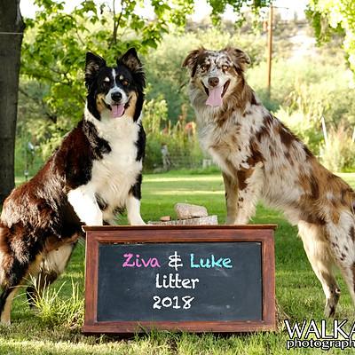 Ziva & Luke Litter 2018