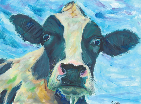 Black and white cow.