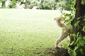 dog behind tree
