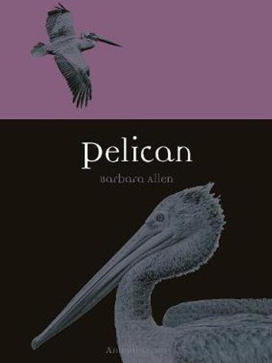 Pelican Barbara Allen