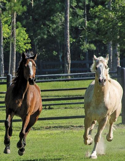 beau and ike running (2).jpg
