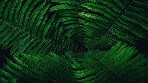 blatter-pflanze-grun-farn.jpeg