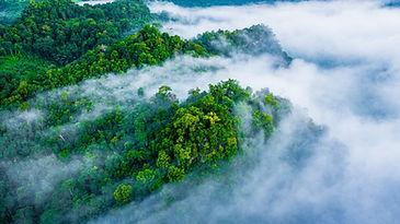 stock-misty-tropical-forest-web-1024x575.jpeg