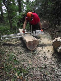 Milling Windblown Oak