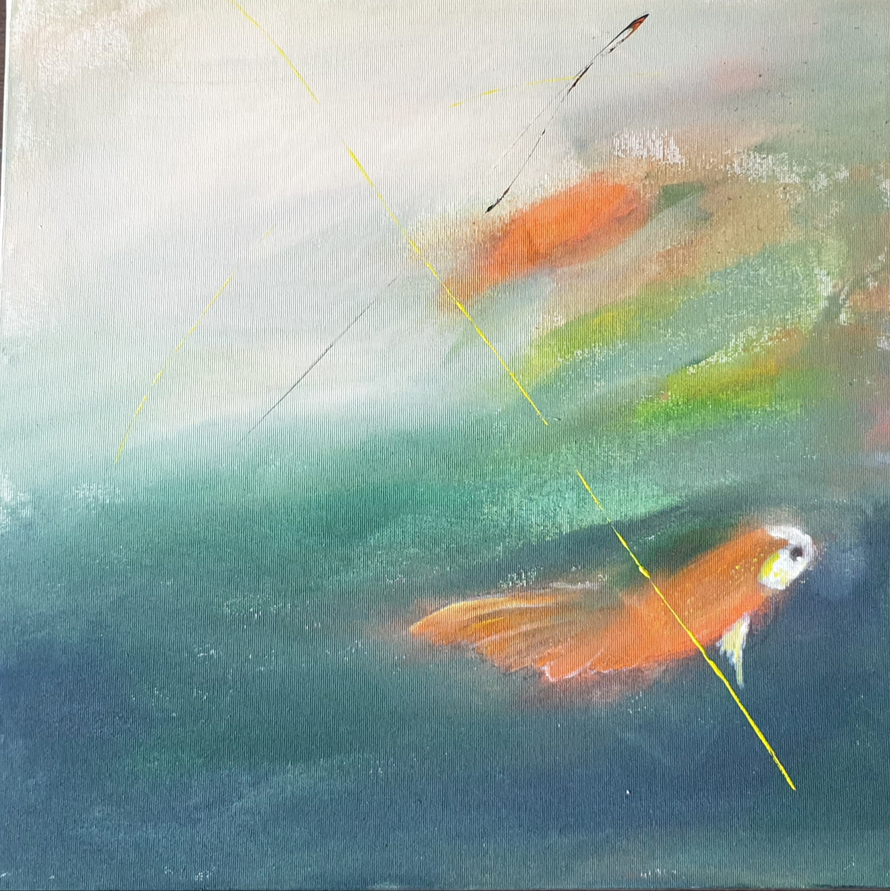 FISH 50X50