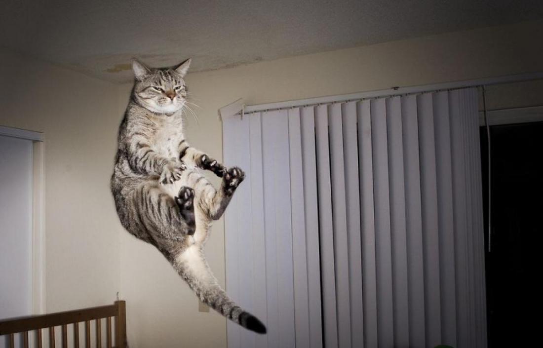 Cat13.jpg