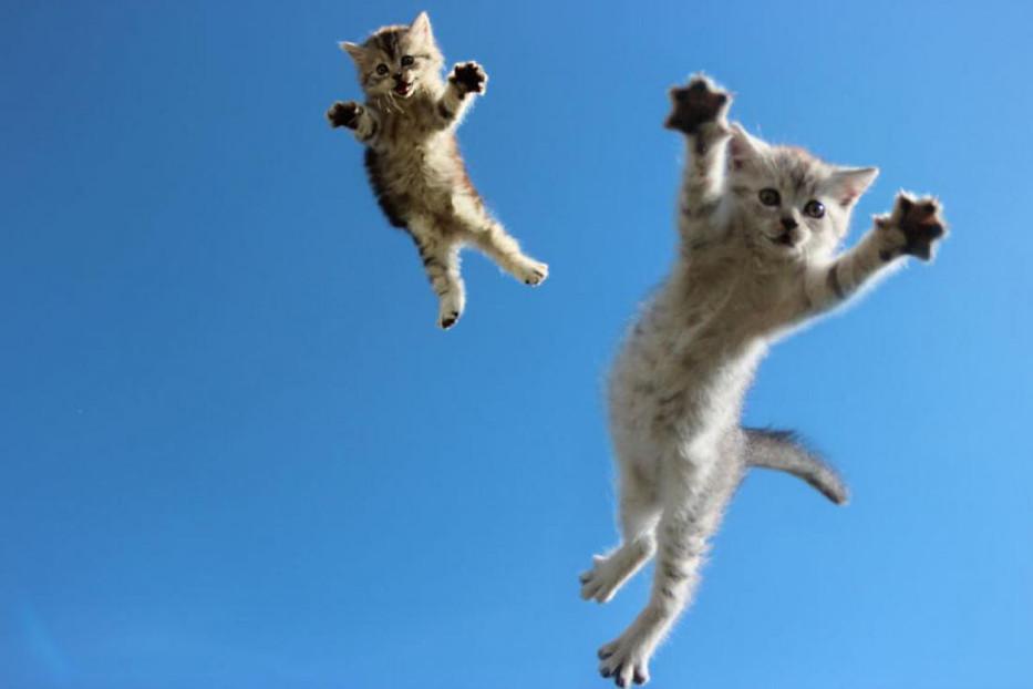 Cat16.jpg